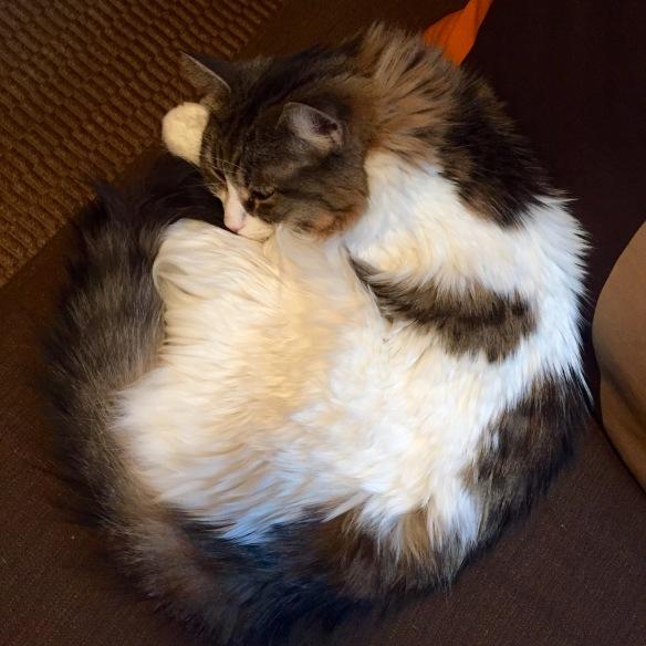 Circle of Cat