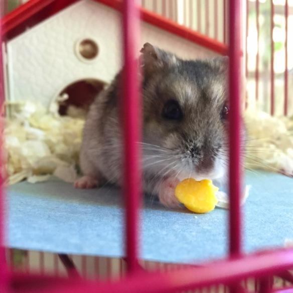 Oscar the Hamster